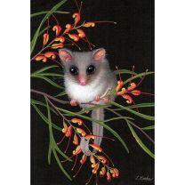 Australian Feathertail Glider, Grevillea Flowers by Lyn Cooke