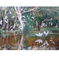 Australian Wetlands by Philip Adams