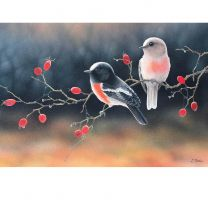 First Light, Autumn Morning (Australian Scarlet Robins) by Lyn Cooke